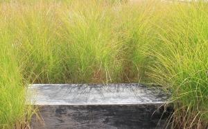 Bench Grass